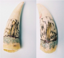 "ScrimshawSperm Whale'sTooth""Rockbound Coast"" Gallery display"