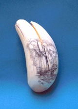 "ScrimshawSperm Whale Tooth""Grand BanksFishing Schooner"" Gallery Display"