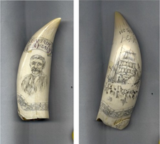 "ScrimshawSperm Whales Tooth ""Ice Ship Bear"" Gallery Display"