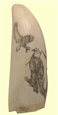 "Gallery Display""Feeding Eagles"" ScrimshawSpermWhale'sTooth"