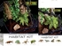 Exo-Terra Rainforest Habitat Kit, Small (includes PT2602)