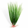 "Hairgrass 10"" aquarium plant"