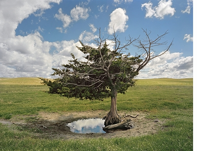 Andrew Moore: Dirt Meridian, Homesteader's Tree