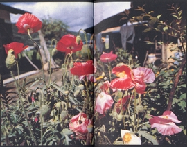 Featured spread is reproduced from <I>Daido Moriyama: Tales of Tono</I>.