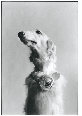 "Featured image, reproduced from <I>Elliott Erwitt: Icons</I>, was taken in New York in 1999. Erwitt writes, ""This is a portrait of a very special dog, a greyhound with a Balenciaga couture flower. The snap was taken here in my studio in New York for a tribute dedicated to the editor in chief of Harper's Bazaar. It had to be an all-white issue, it was actually called the white issue, and all of the photographs had to be white."