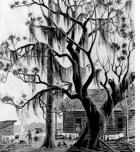 "Featured image, ""Under the Chinaberry Tree,"" a 1947 wood engraving by Grace Albee, is reproduced from <I>In the Eye of the Muses</I>."