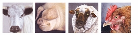 "Featured animal portraits are reproduced from <a href=""9783775726542.html"">Karin Kneffel 1990-2010</a>."