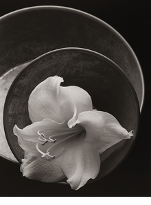 Kenro Izu: Seduction