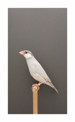 Luke Stephenson: An Incomplete Dictionary of Show Birds