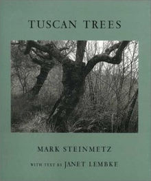 Mark Steinmetz: Tuscan Trees