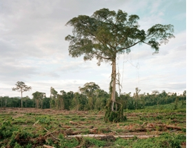 """Deforestation of Primary Forest, Central Kalimantan, Indonesia 03/2012"" is reproduced from <I>Olaf Otto Becker: Reading the Landscape</I>."