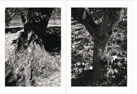 Featured images are reproduced from <I>Pedro Cabrita Reis: Tree of Light</I>.