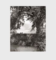 Robert Adams: Cottonwoods