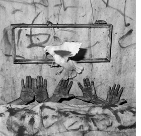 Featured image is reproduced from <I>Roger Ballen: Animal Abstraction</I>.