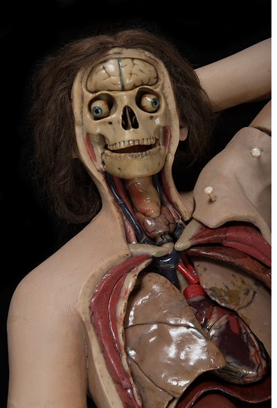 Halloween Reading: The Anatomical Venus: Wax, God, Death & the Ecstatic