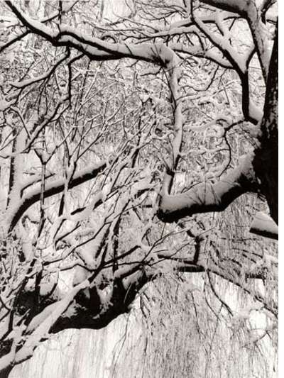 Winter Through the Lens of Paul Strand