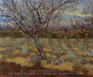 Apricot Tree in Bloom painting reproduction, Vincent Van Gogh