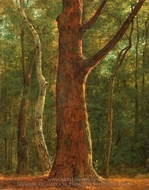 Beech Tree painting reproduction, Achille-Etna Michallon