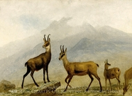 Chamois painting reproduction, Albert Bierstadt