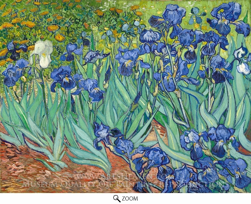 Vincent Van Gogh, Irises oil painting reproduction