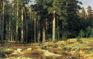 Mast Tree Grove painting reproduction, Ivan Shishkin