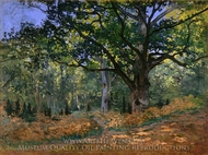 The Bodmer Oak, Fontainebleau Forest painting reproduction, Claude Monet