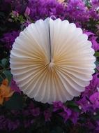 "12"" Beige / Ivory Tissue Paper Flower Rosette Fan Decoration (6 PACK)"