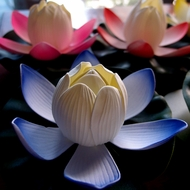 Floating Water Lotus Lights