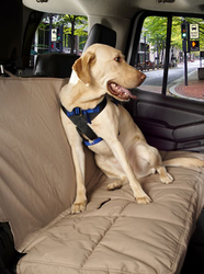 Canine Covers Travel Safe Harness