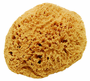 Large Natural Sea Sponge