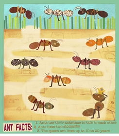 amy schimler - ants wall art