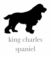 style king charles spaniel