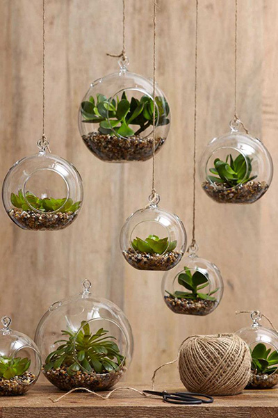 Top 10 succulent decorating ideas for Room decor ideas with plants