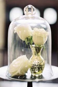 Bell Jars, Glass Cloches - Click to enlarge