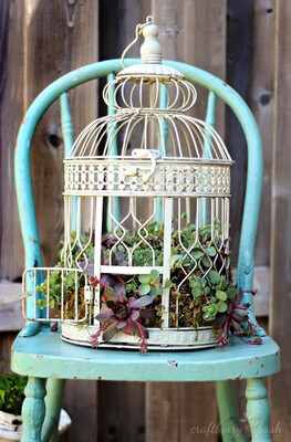 Bird Cages & Birds
