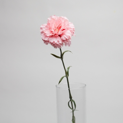 Carnation Flower Pink 27in