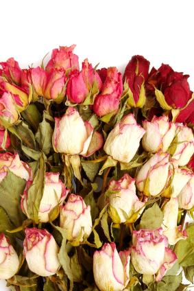 DIY How to Dry Roses - Click to enlarge