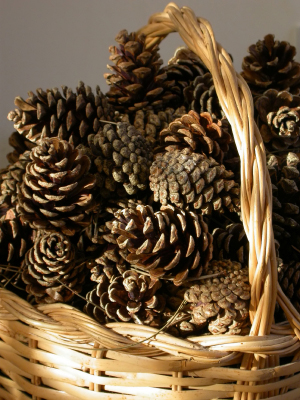 DIY Make a  Basket of Light  with Pinecones - Click to enlarge