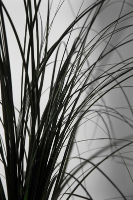 Dried grasses, wheat, reeds