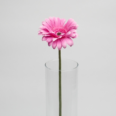 Gerbera Daisy Pink 24in (Pack of 24)