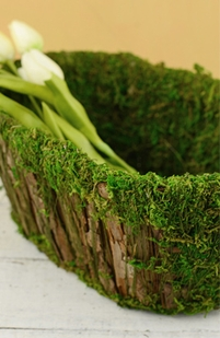 Moss Natural & Artificial