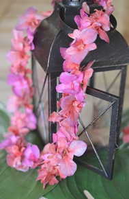 Orchids Flowers, Petals, Leis - Click to enlarge