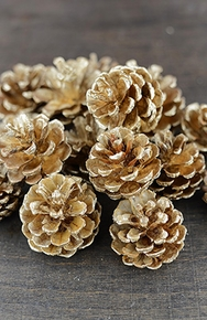 Pine Cones - Click to enlarge