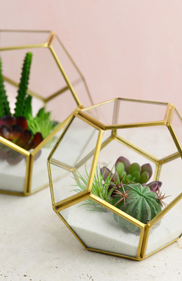Terrarium Displays Containers Amp Supplies 20 60 Saveoncrafts