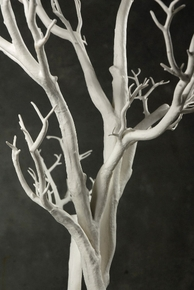 Trees,  Potted Trees,  Tree Tops, Topiaries  - Click to enlarge