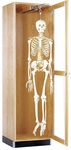 Science Lab Hanging Skeleton Wooden Locking Cabinet with Retractable Glide - 24''W x 22''D x 84''H [375-2422-DW]
