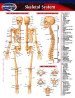 Skeletal System 8 1/2x11 Laminated