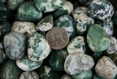 Tree Agate Tumbled Stones
