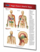 "Trigger Points I: Head and Torso Chart 8 1/2"" x 11"""