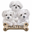 Maltese Puppies T-shirt - Dog Bone Adult Tee Shirt